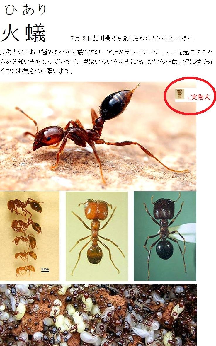 火蟻に注意.jpg